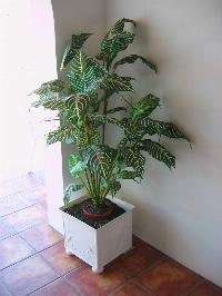 envase ceramica para planta