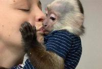 Venta de bebé capuchinos soltero muy saludable