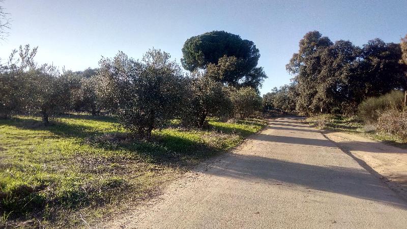 FINCA RUSTICA EN DOÑANA, Huelva, 7. 000m. Olivos manzanillo.   - Foto 1