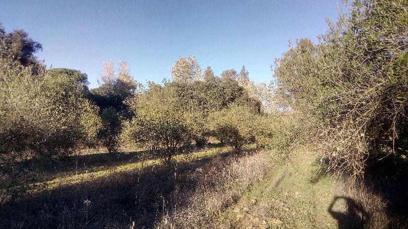 FINCA RUSTICA EN DOÑANA, Huelva, 7. 000m. Olivos manzanillo.