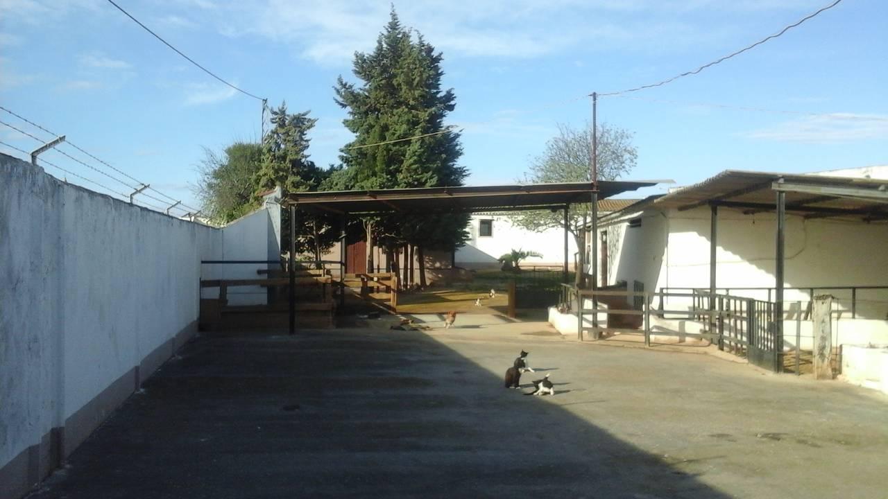 VENTA - FINCA CON CHALET - CAMPILLOS - MALAGA - ANDALUCIA  - Foto 9