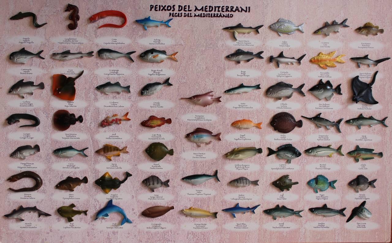 Cuadro de peces