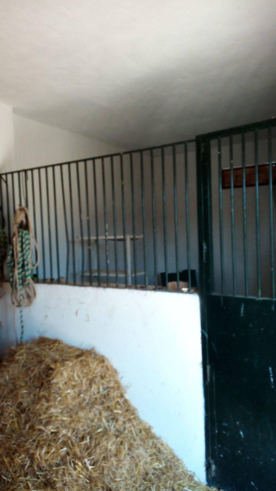 Finca las Almenillas  - Foto 5