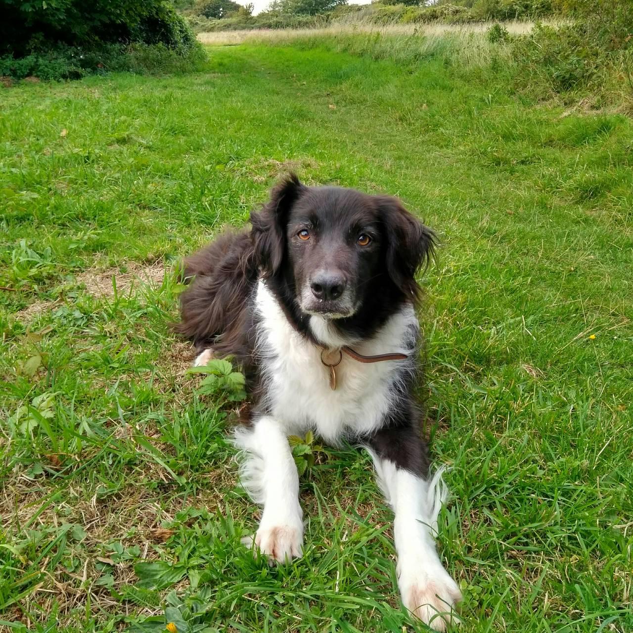 Au-pair (cuidando de un perro) / £70/semana  - Foto 1