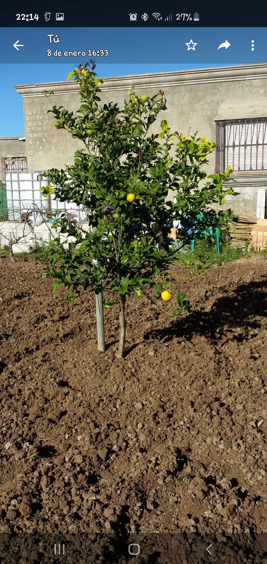 Vendo parcela en Montes de Toledo  - Foto 5