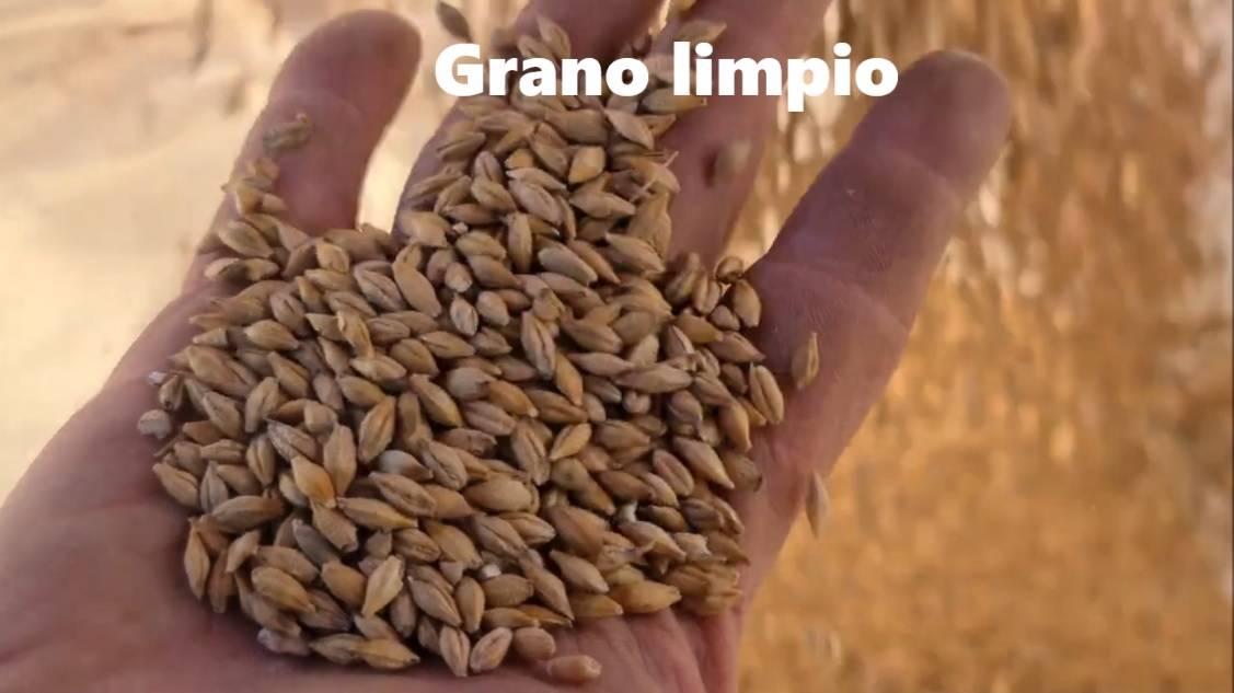 Separador de impurezas de semillas, granos, leguminosas  - Foto 3